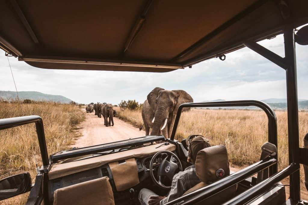 Safari au Mozambique - Game Drive