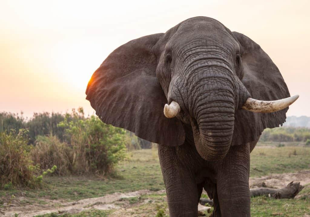 Safari en Ouganda - Chutes Murchison
