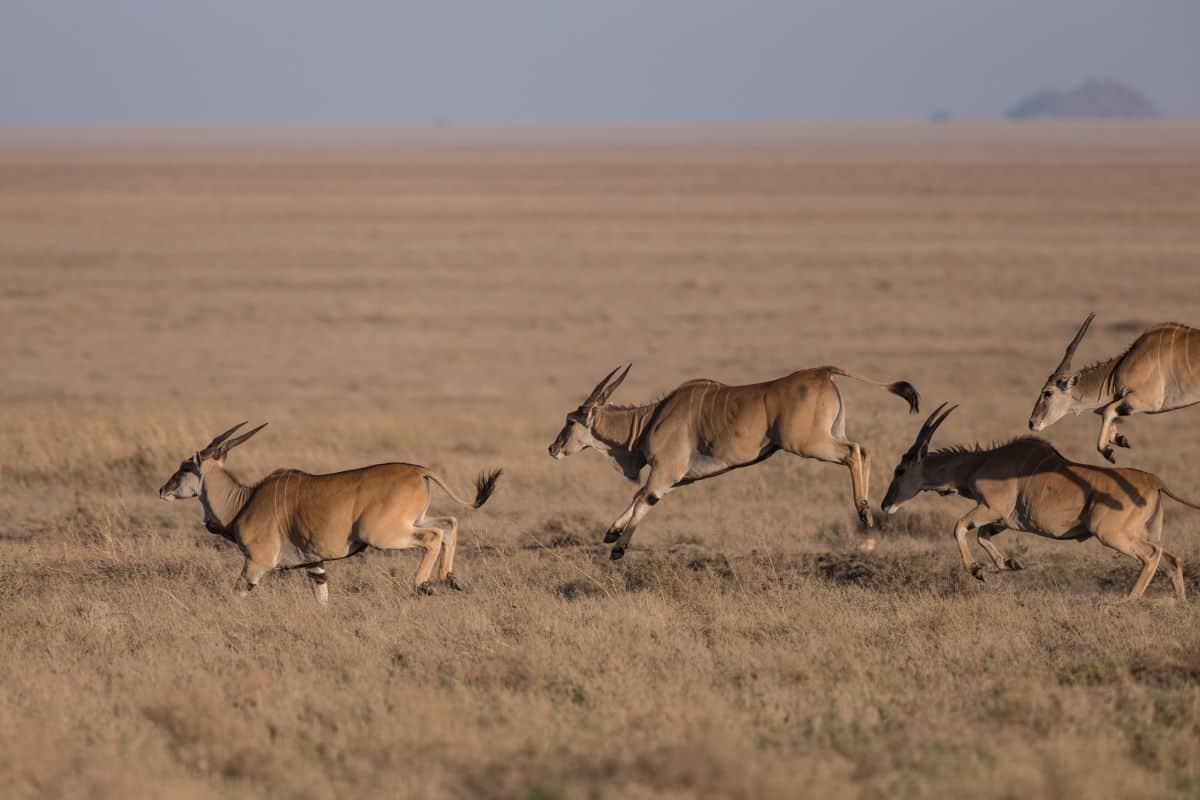 antilope au parc national de chimanimani