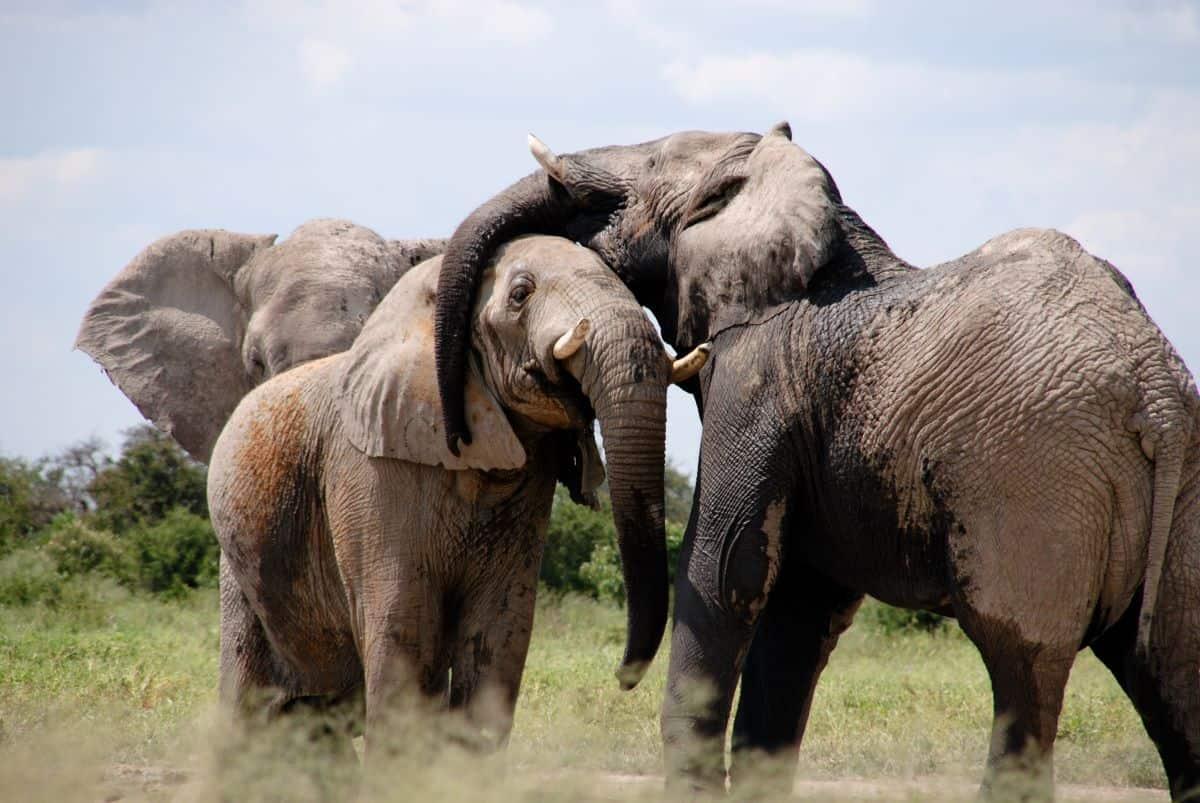 éléphants au parc natioal de Gorongosa