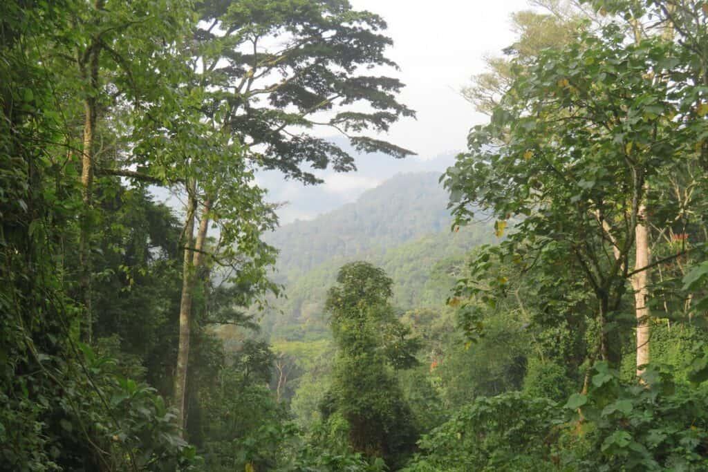 forêt du parc de bwindi