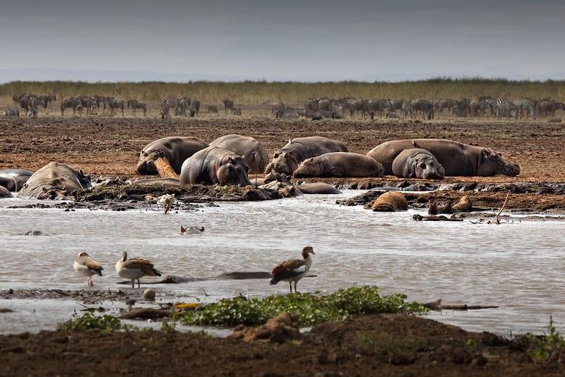 Parc national Lac Manyara