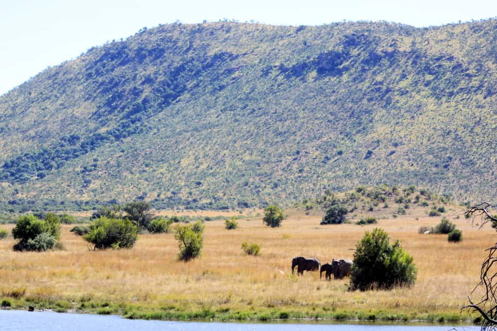 Parc de Pilanesberg