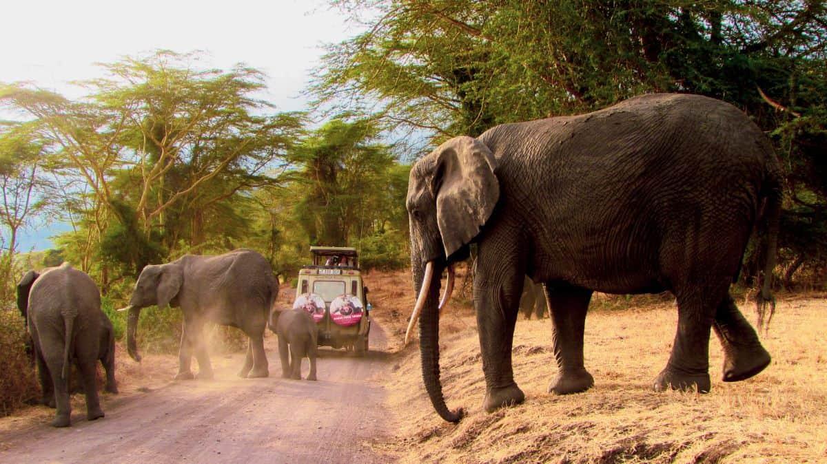 éléphants du parc national de serengeti