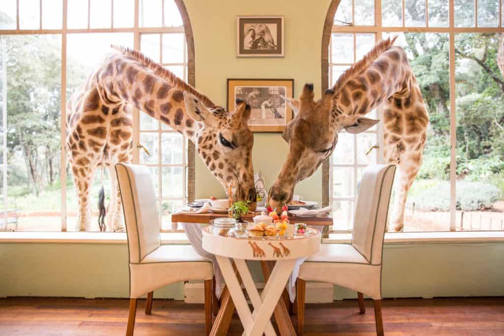 Petit déjeuner au Giraffe Manor
