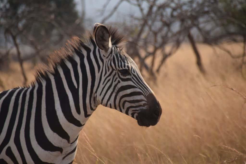 Safari au Rwanda - Parc National d'Akagera