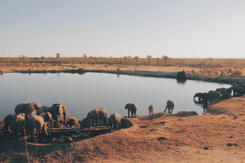 Safari au Zimbabwe - Hwange National Park
