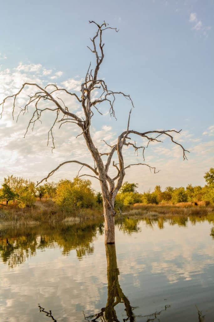 Safari au Zimbabwe - Lac Kariba