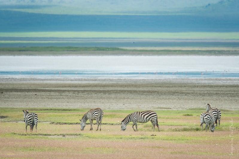 Parc Ngorongoro